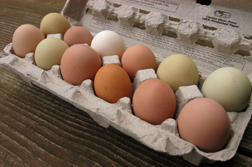 More Nutritious Eggs from Pastured Chickens