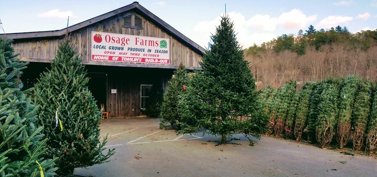 Osage Christmas Trees in North Georgia
