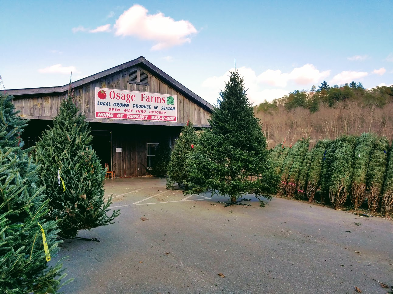 Real Christmas Trees In The North Georgia Mountains