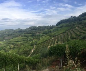 Image of Mount Vulture in Italy filled with grape vines
